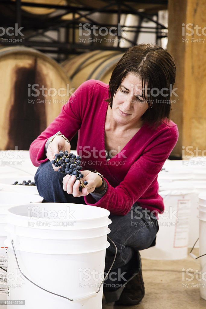 Female worker inspecting a grape at  winery royalty-free stock photo