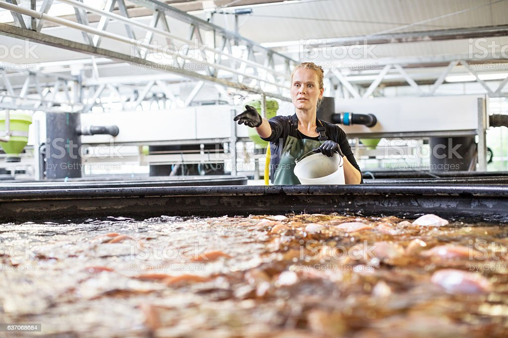 Female worker working in fish farm stock photo