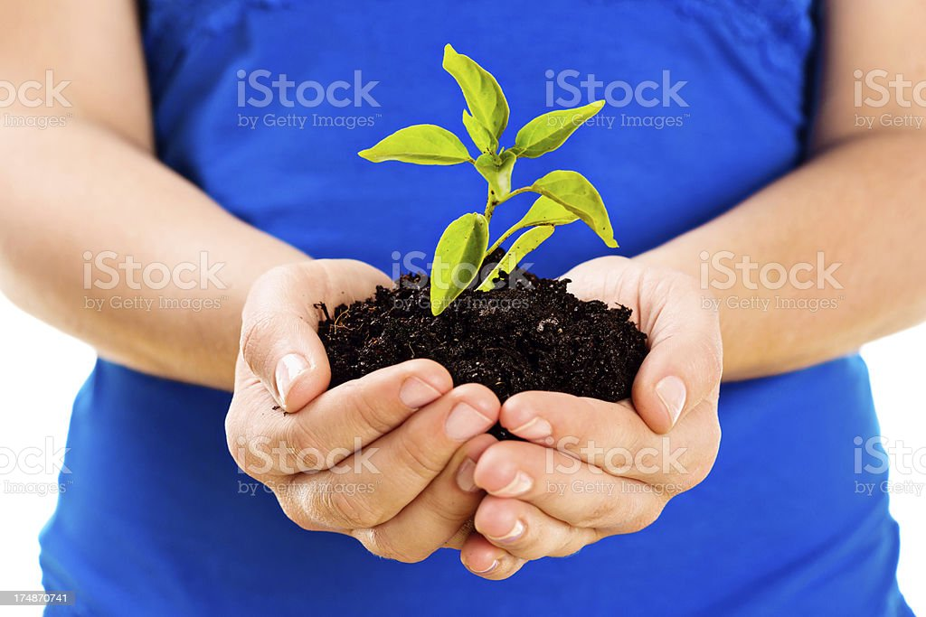 Feminine hands gently hold a baby plant royalty-free stock photo