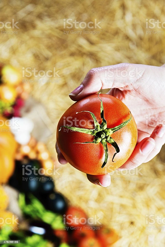 Feminine hands hold ripe red tomato in farmers market royalty-free stock photo