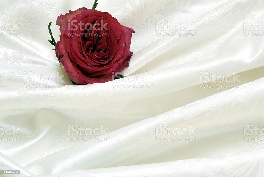 femininity royalty-free stock photo