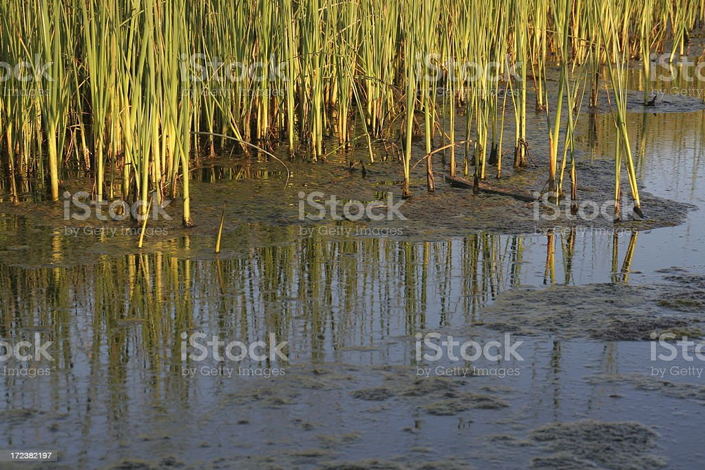 Fen Grass stock photo