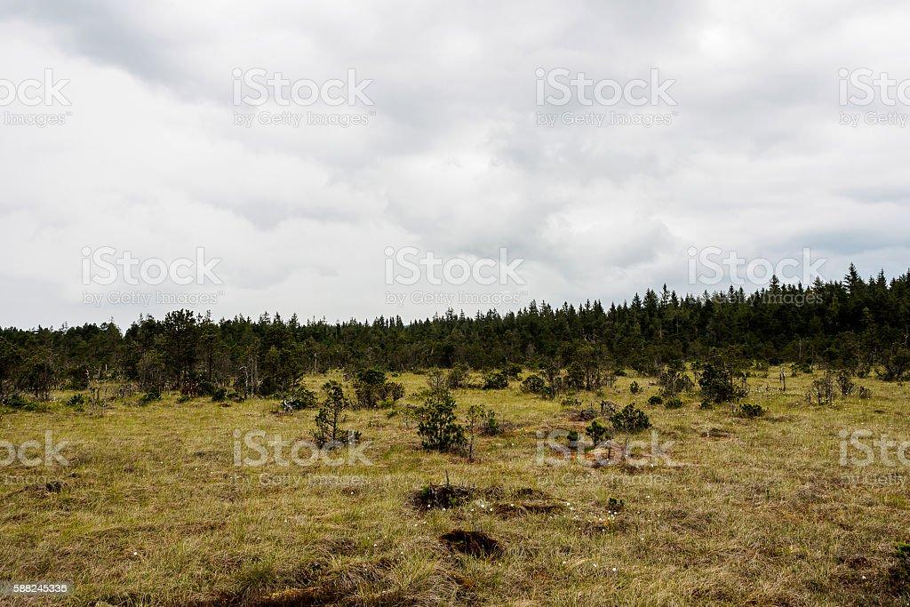 Fen in the woods stock photo