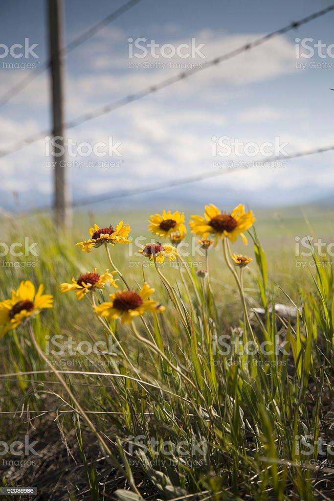 Fence and Flowers 2 royalty-free stock photo