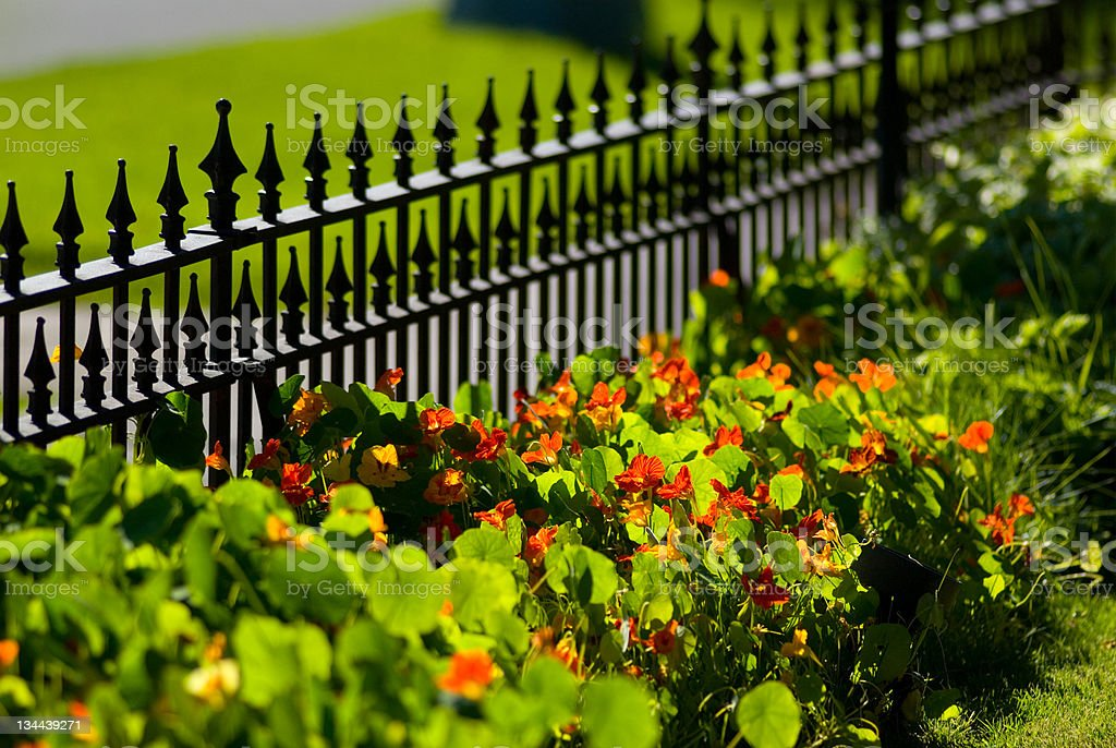 Fence and flowers royalty-free stock photo