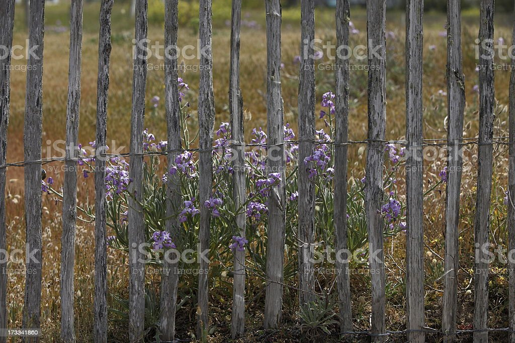 Fence and flowers stock photo