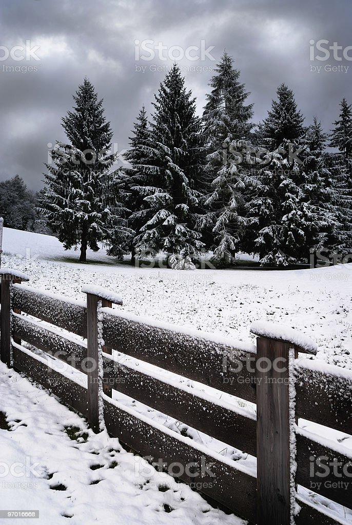Fence and pines in the snow royalty-free stock photo