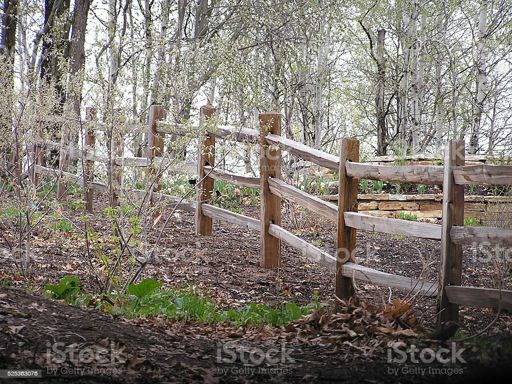 Fence and Trees stock photo