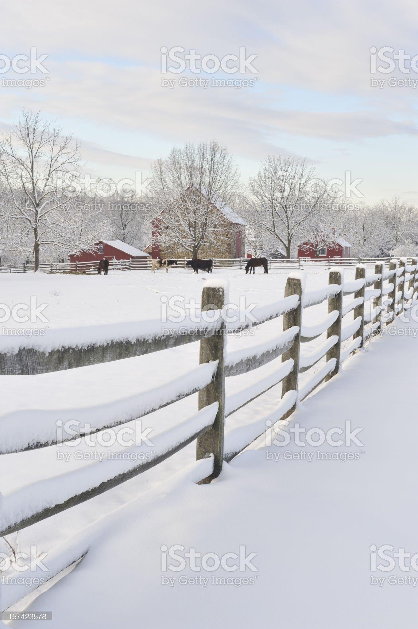 Fence at Farm royalty-free stock photo