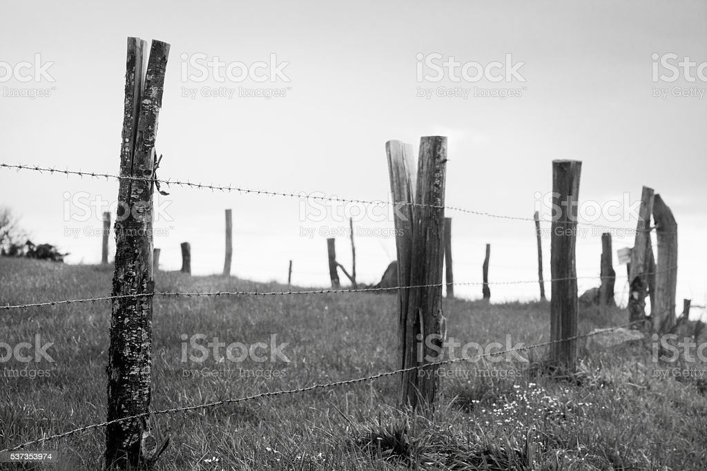Fence in black and white. stock photo