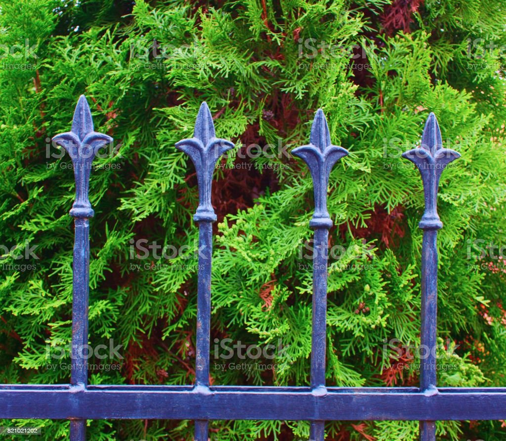 Fence in the background of trees stock photo