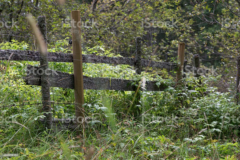 Fence in the nature royalty-free stock photo