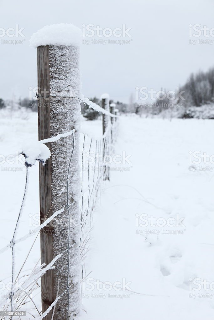 Fence in winter royalty-free stock photo