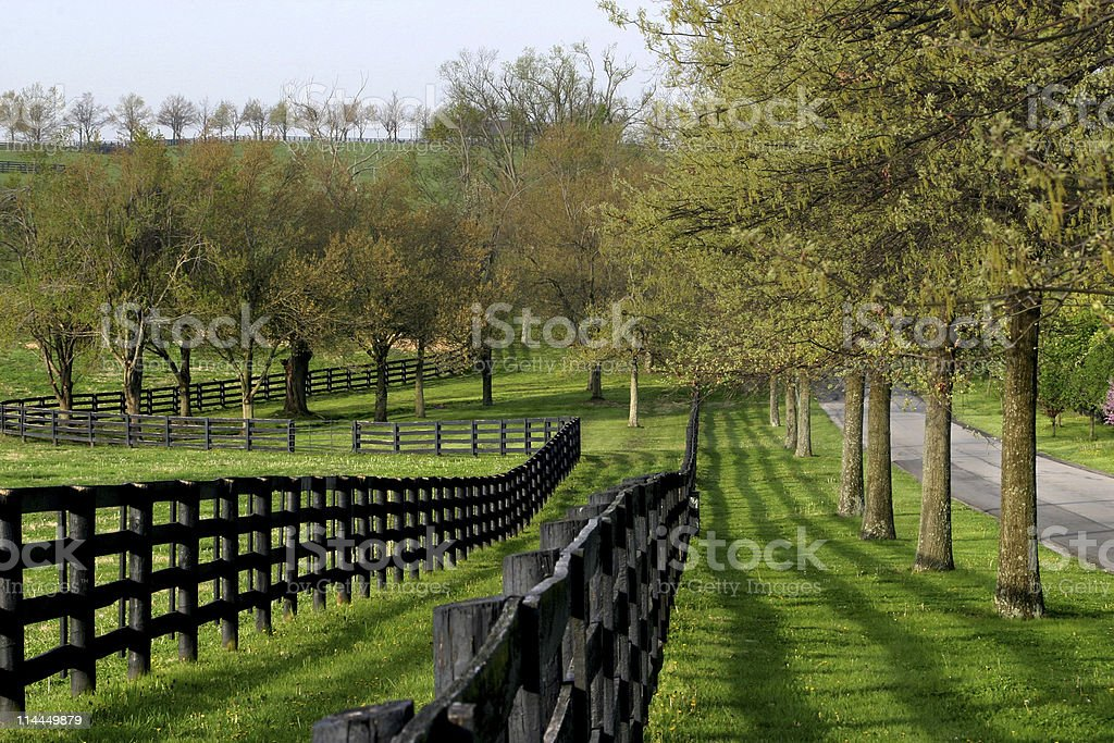 Fence Line and Lane stock photo