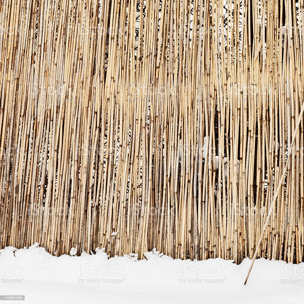 fence of dry cane in winter stock photo
