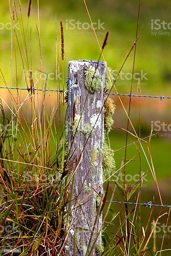fence post stock photo