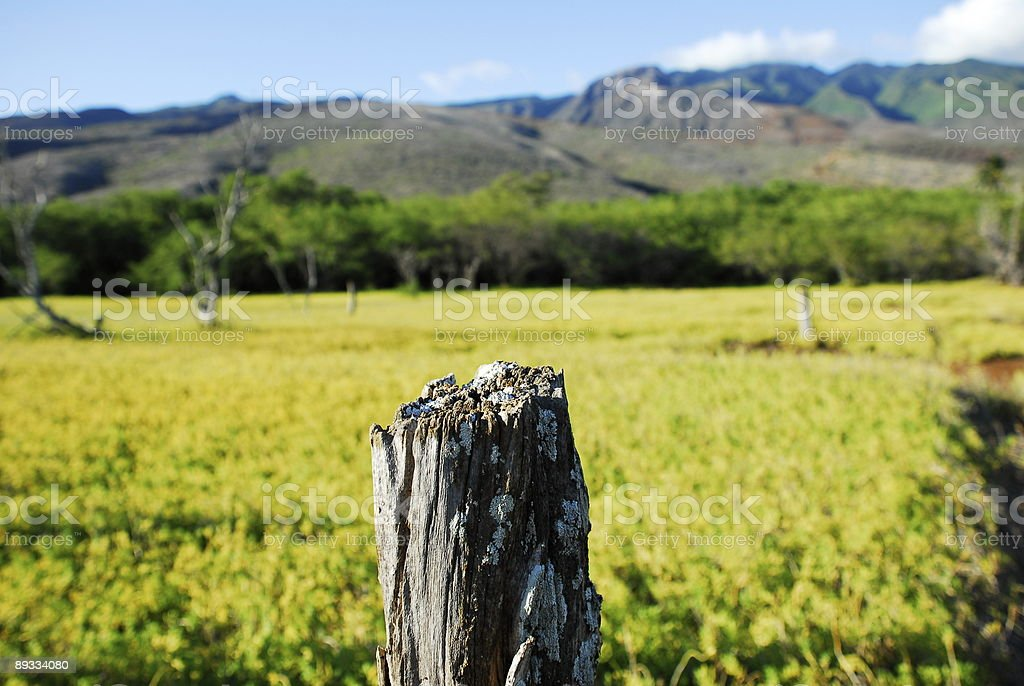 Fence Posts 5 royalty-free stock photo