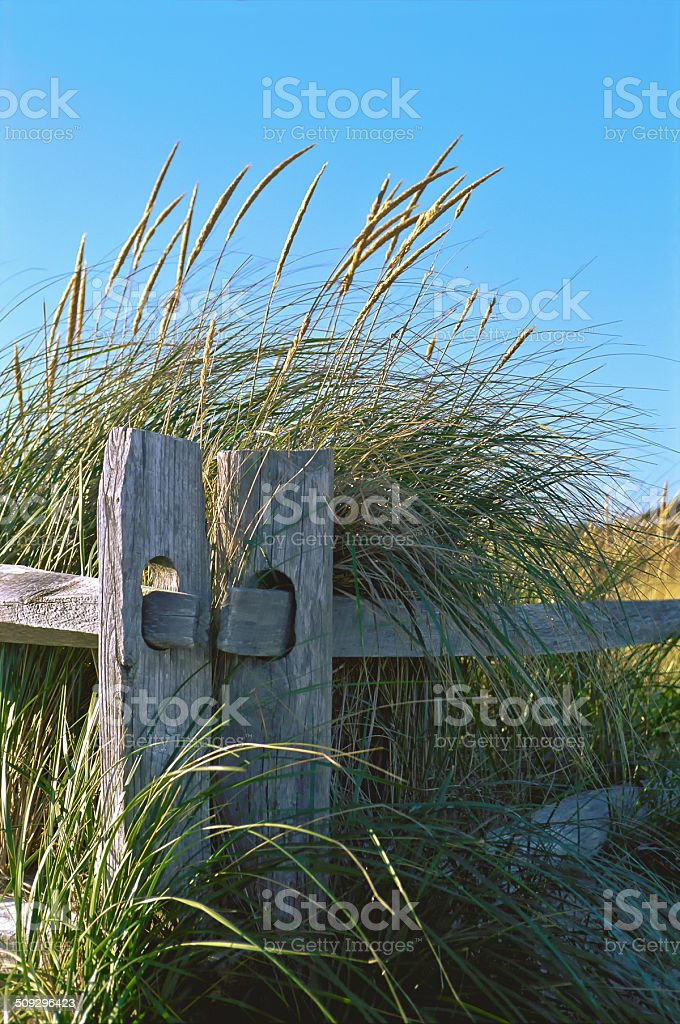 Fence Posts royalty-free stock photo