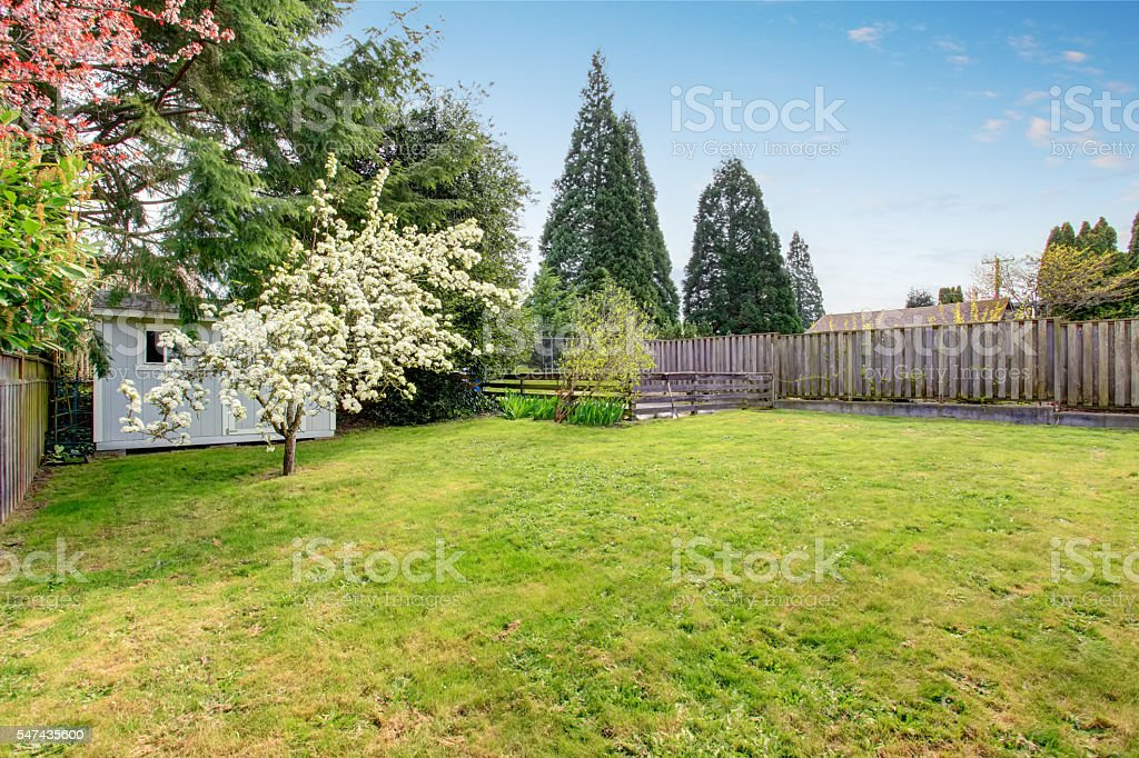 Fenced backyard with grass filled garden and small shed. stock photo