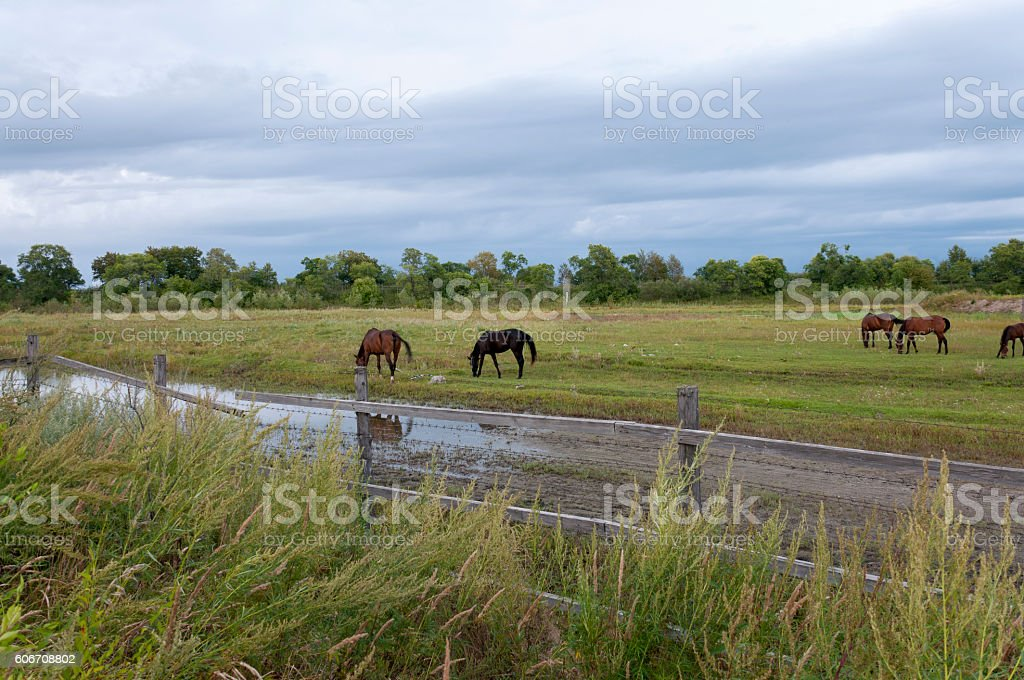 Fenced pastures with horses stock photo