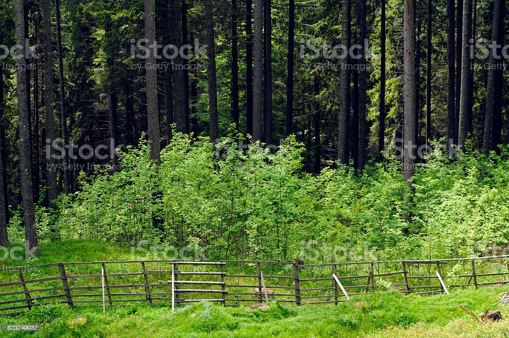 Fencing for forest regeneration stock photo