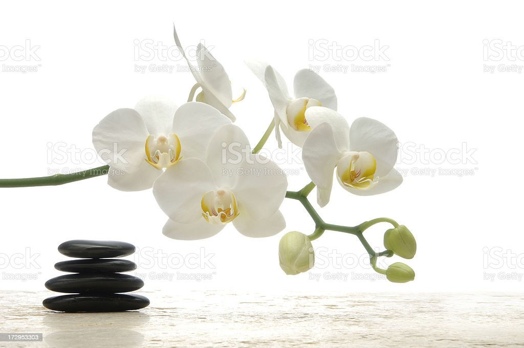 Feng-Shui Orchid stock photo