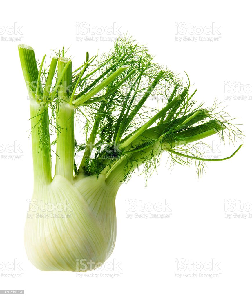 Fennel Bulb Organic Green Fresh Vegetable Food Isolated on White stock photo