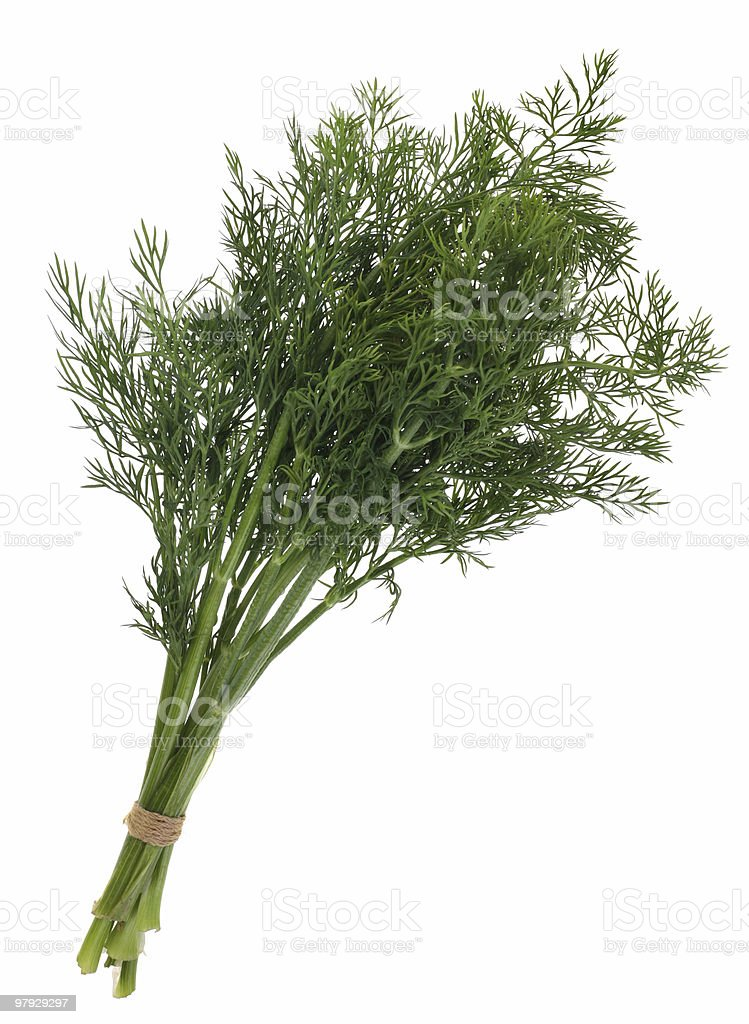 Fennel bunch royalty-free stock photo