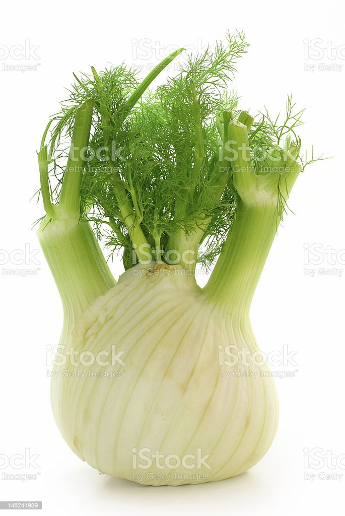 Fennel royalty-free stock photo