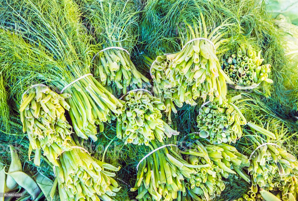 Fennel plant in bunches stock photo