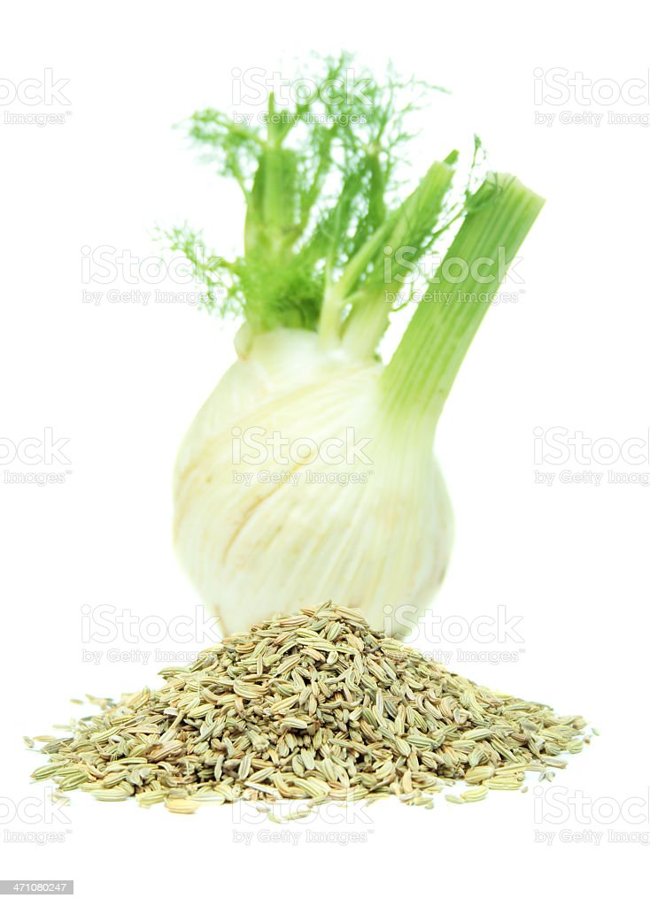 Fennel Two Ways royalty-free stock photo