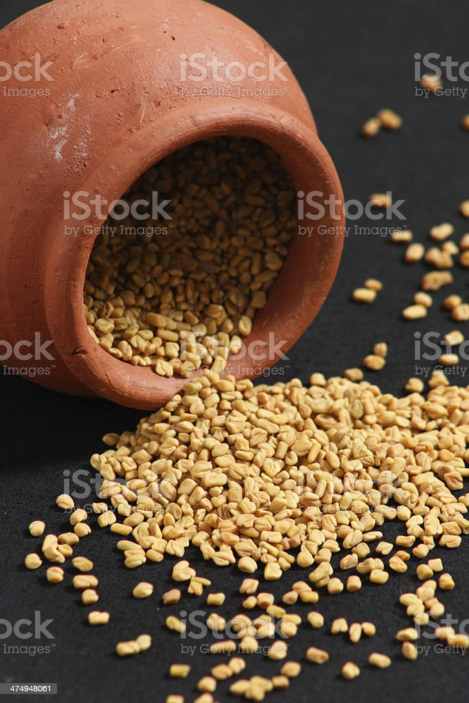 Fenugreek is used both as an herb and a spice stock photo