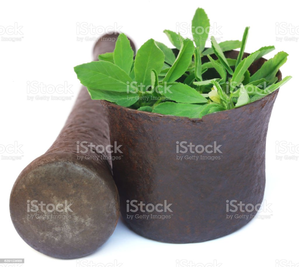 Fenugreek leaves in a mortar with pestle stock photo