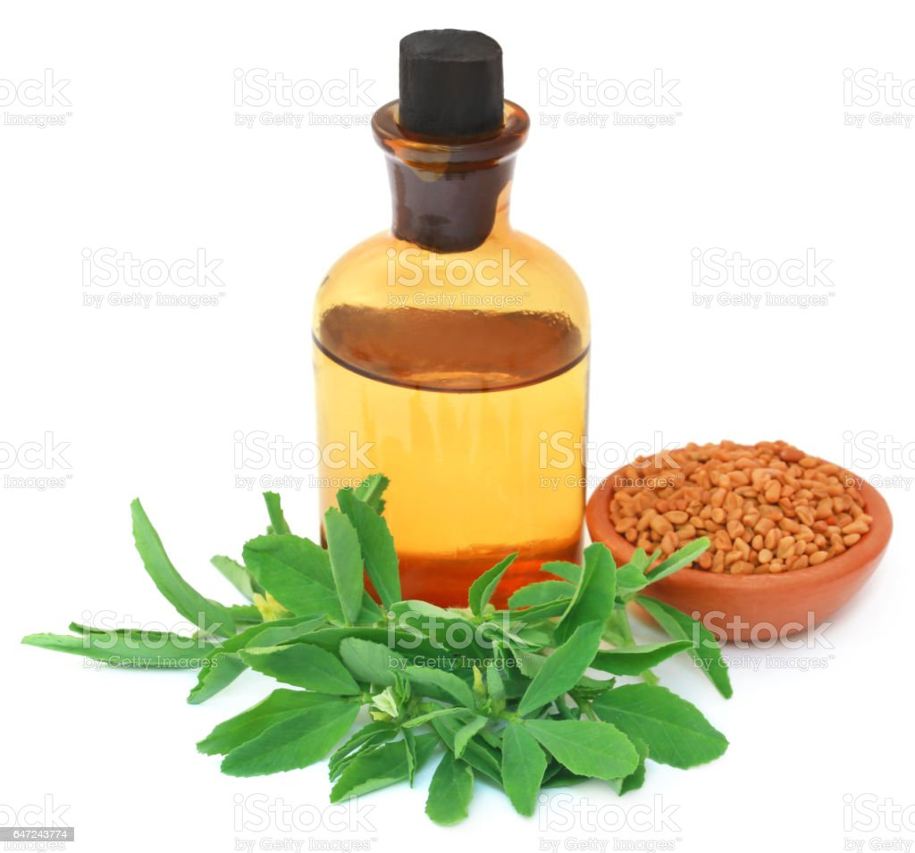 Fenugreek leaves with seeds and oil stock photo