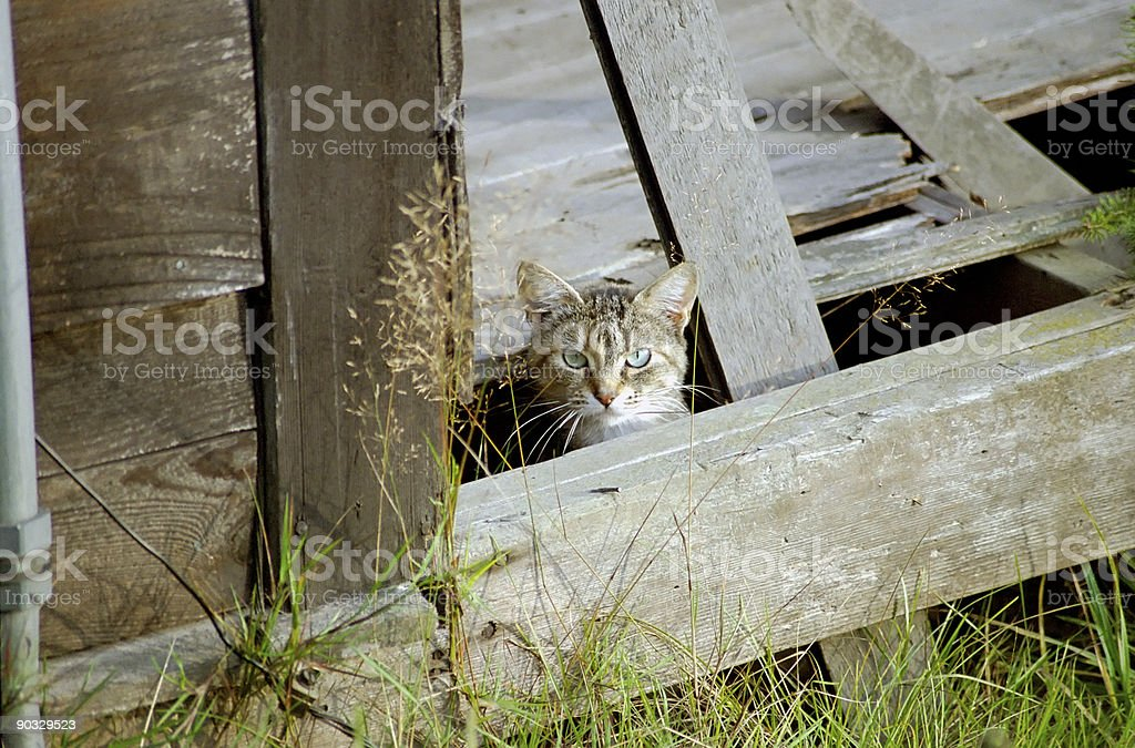 Feral cat in abandoned house stock photo