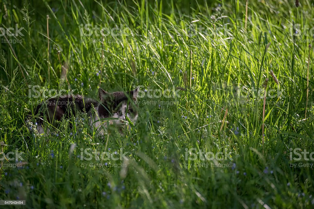 Feral Cat in the Grass stock photo