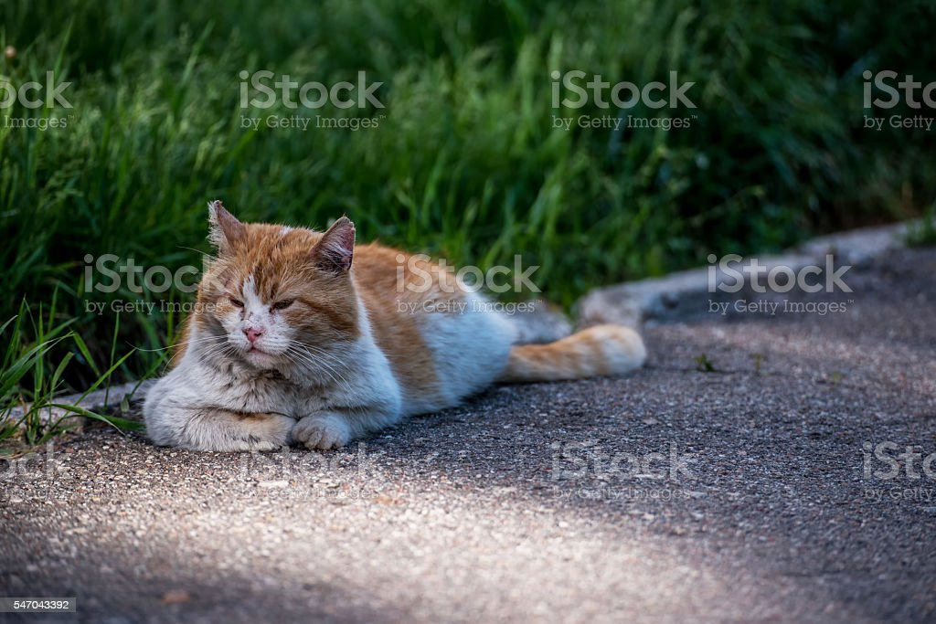 Feral Cat Relaxing on Path stock photo