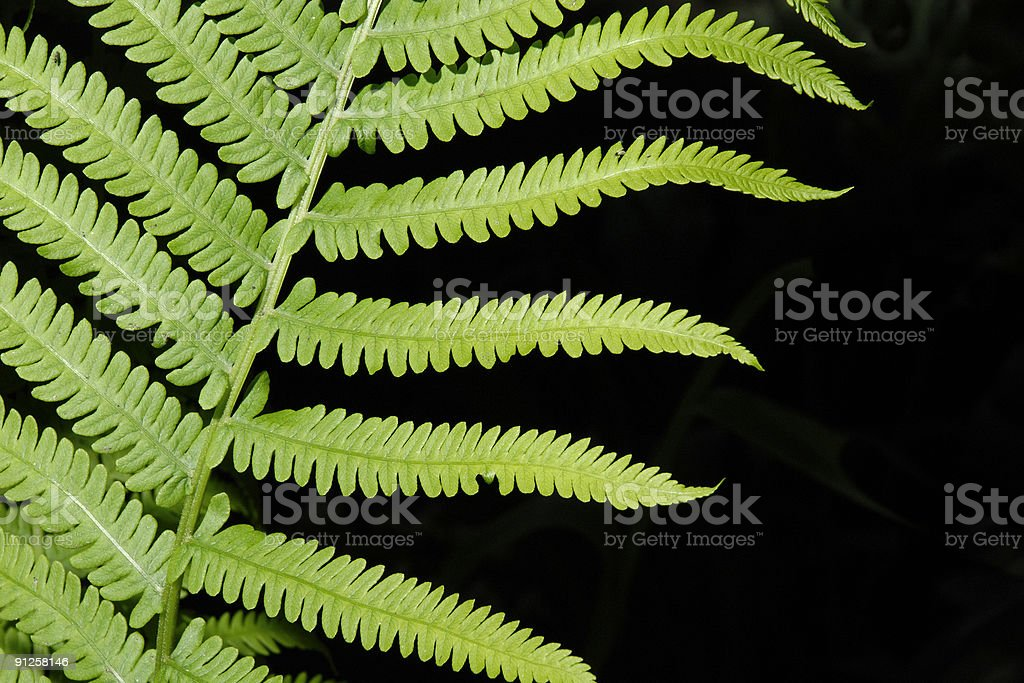 Fern Abstract royalty-free stock photo