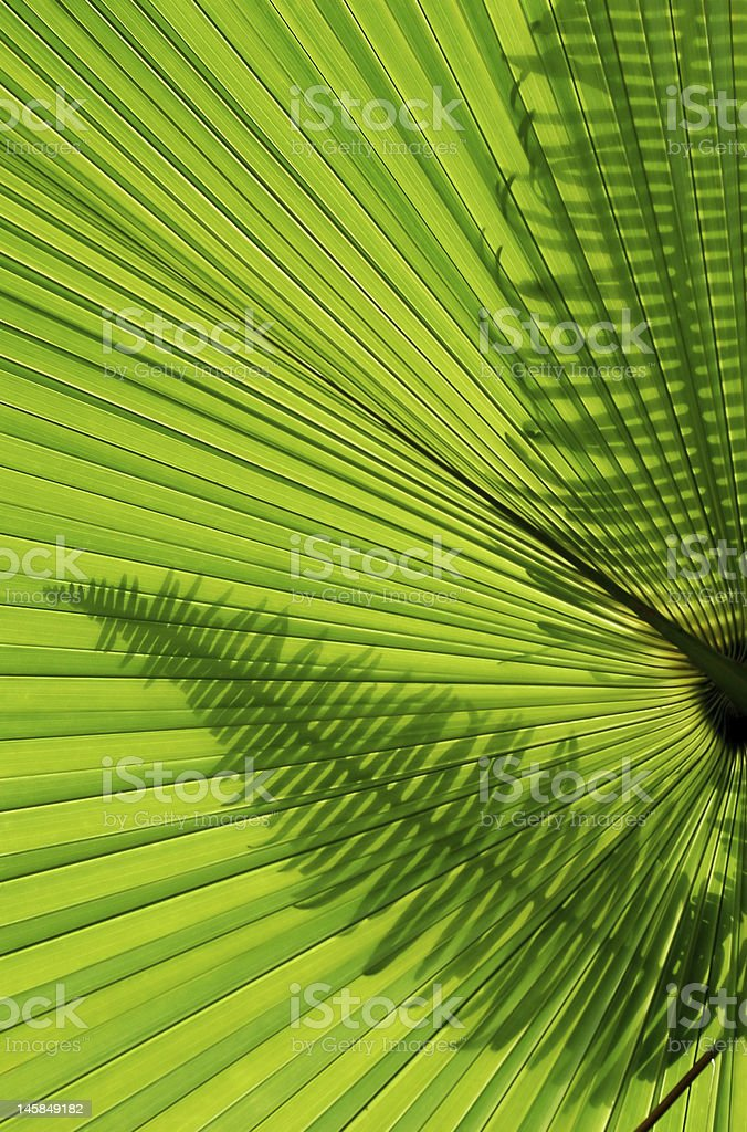 Fern and plam leaf background royalty-free stock photo