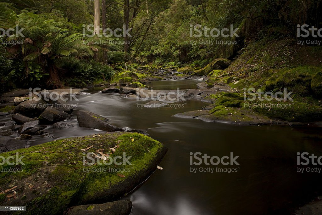 Fern and river rainforest Otways royalty-free stock photo
