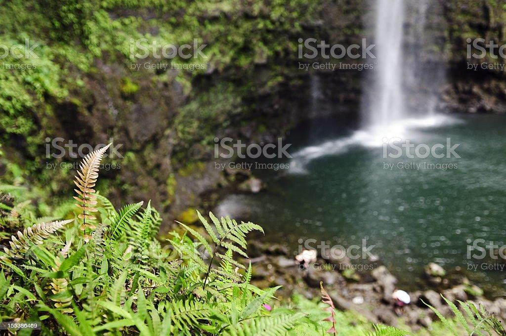 Fern and waterfall stock photo