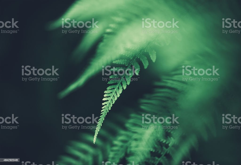Fern Background stock photo