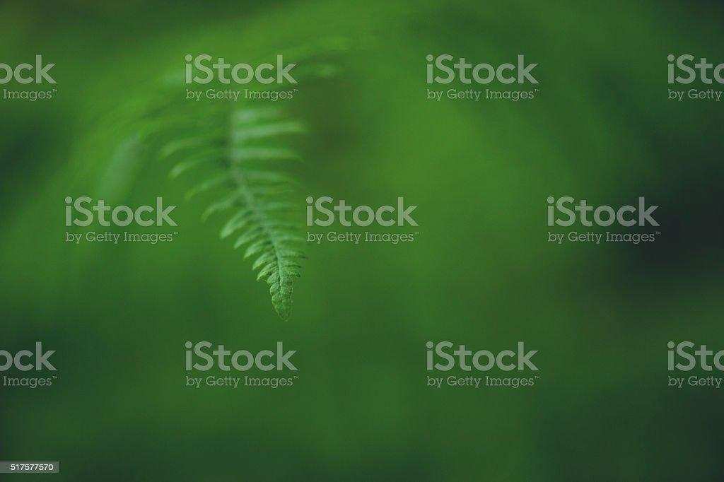 Fern Background stock photo
