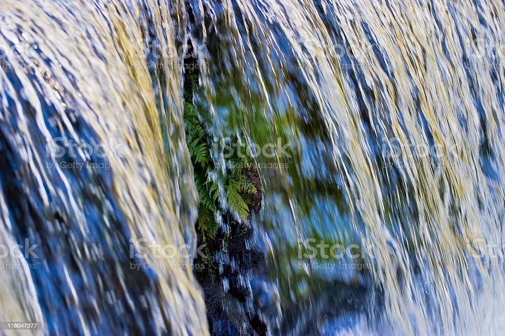 Fern behind the waterfall royalty-free stock photo