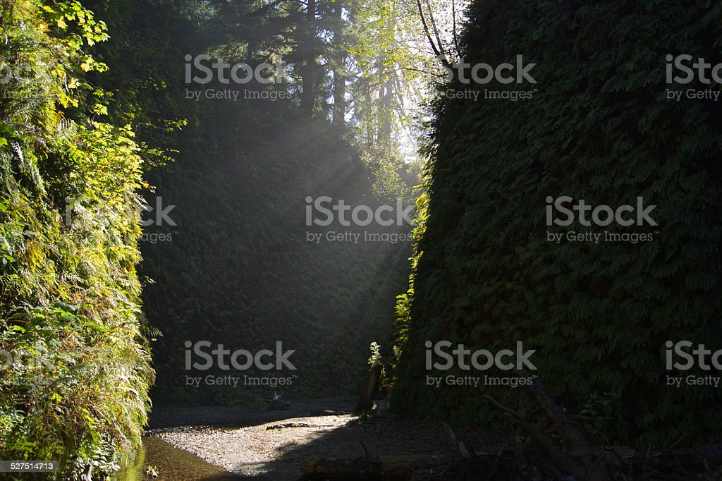 Fern Canyon's Steep Walls stock photo