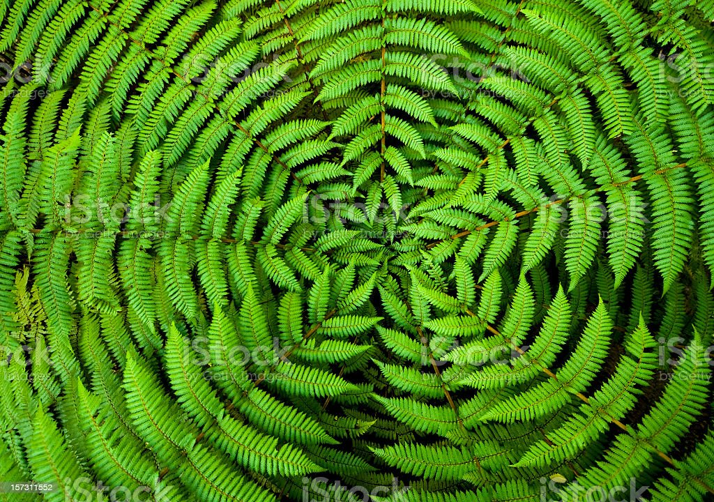 Fern Circle Background royalty-free stock photo