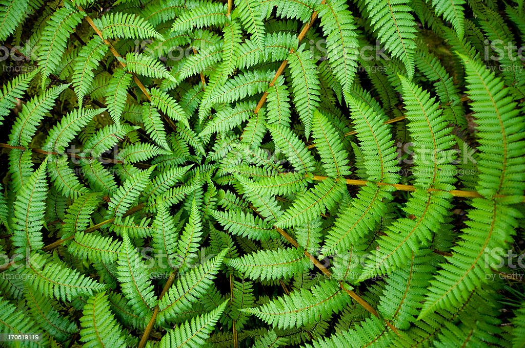 Fern Circle stock photo