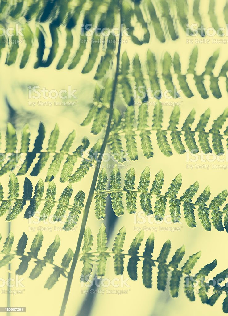 Fern close-up royalty-free stock photo