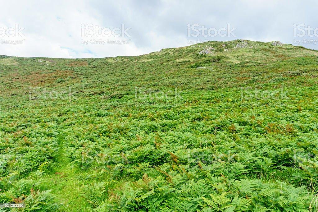 Fern covered cliff on remote coastal headland stock photo