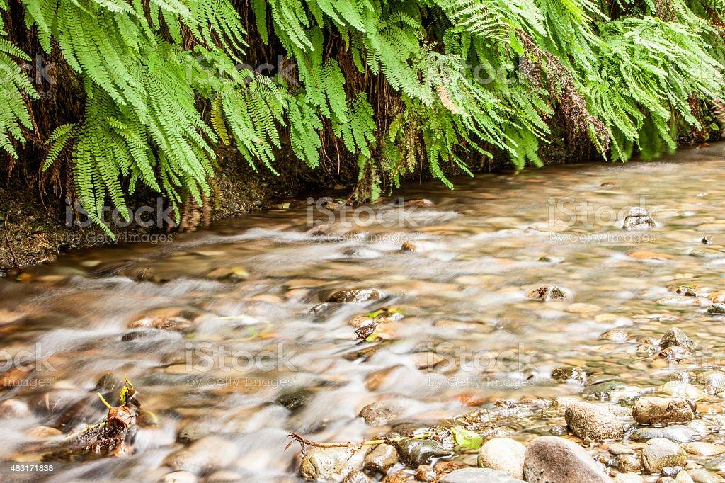 Fern Creek stock photo